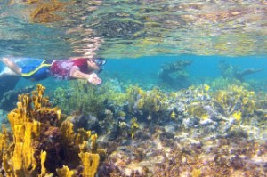 Snorkeling the barrier reef of Grace Bay Beach